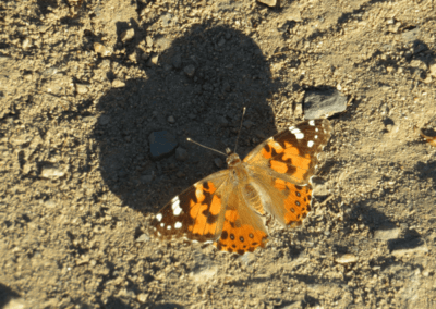 butterfly_w_shadow