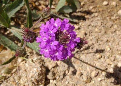 pollinator_garden_pic_1_1