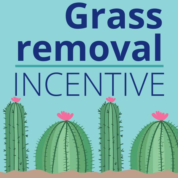 Grass-Removal_1